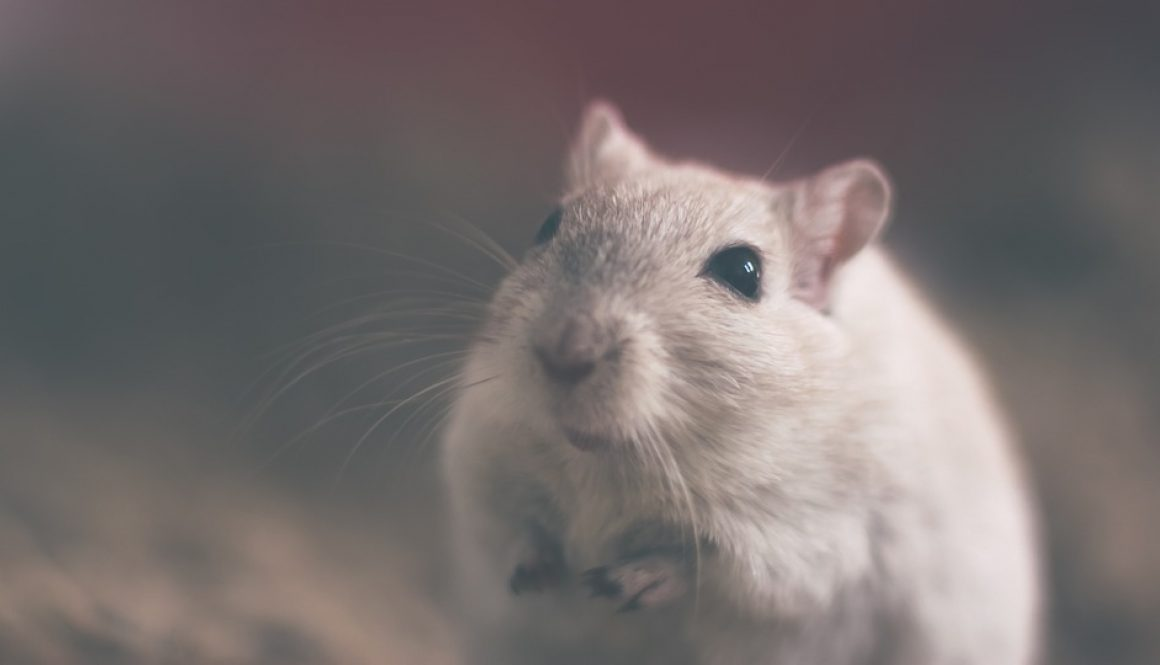 mouse-801843_960_720